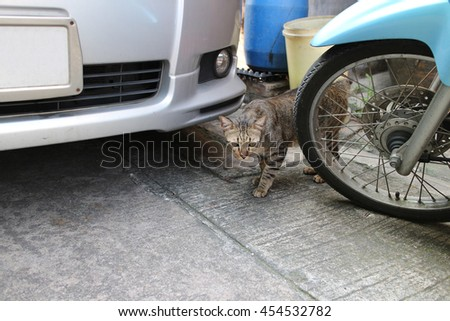 Street road grey tabby home cat hiding between silver car and blue motorcycle wheel, rough cement concrete floor. - stock photo