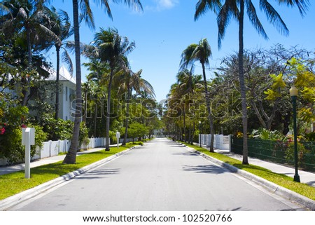 Street with Palms