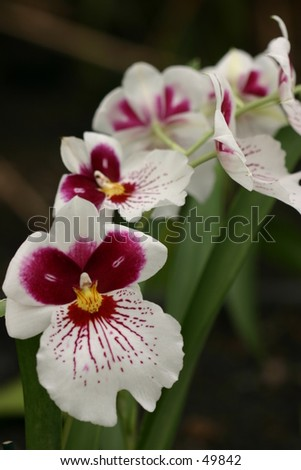 string of white orchids - stock photo