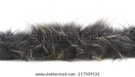 Strip of gray fur isolated over the white background - stock photo