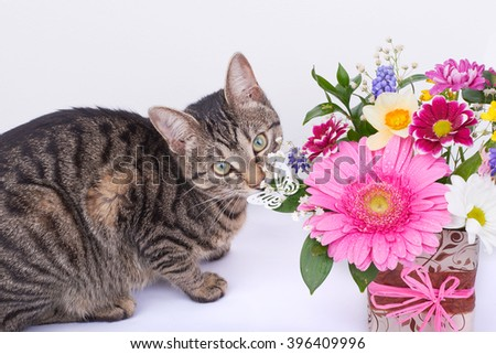 Striped beautiful cat is smelling the bouquet of flowers on a white background