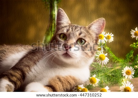 Striped cat lies with daisies on a brown background - stock photo