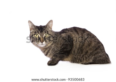 Striped cat looking to the side isolated on white - stock photo