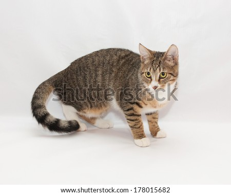 Striped cat looks warily toward