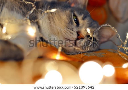 striped cat lying in the chain. glow lights. Christmas backgrounds. space for text