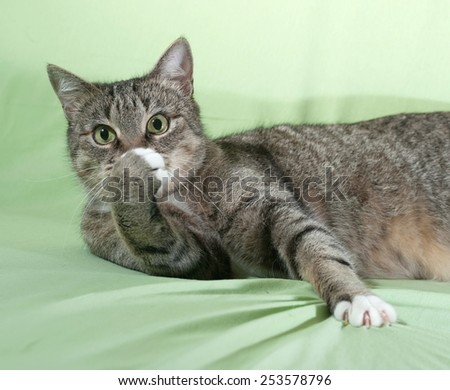 Striped cat lying on green background