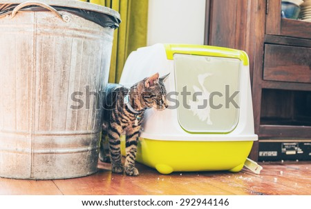 Striped grey tabby standing alongside a plastic covered litter box and garbage bin indoors in a house - stock photo