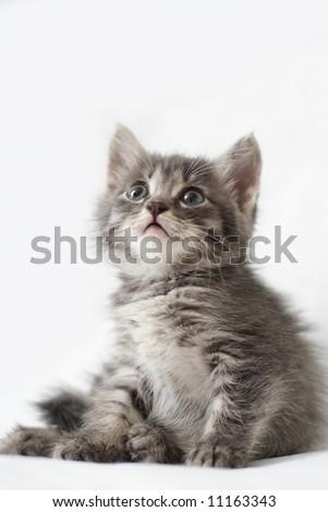 Striped kitten - stock photo