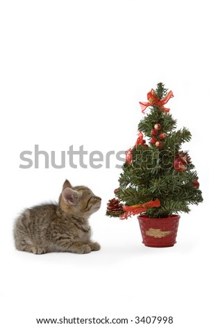 striped kitten and a decorated christmas tree