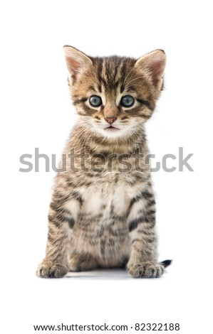 striped kitten isolated on white background