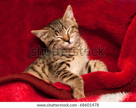 Striped Kitten on a red blanket - stock photo