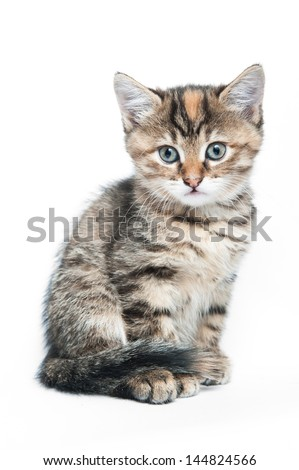 Striped kitten on a white background - stock photo