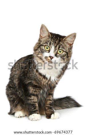 Striped kitten sits on a white background