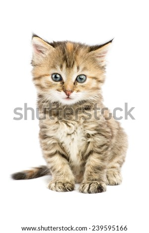 Striped kitten sitting with astonishment looks in front of him - stock photo