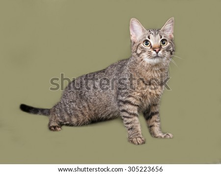 Striped kitten standing on green background