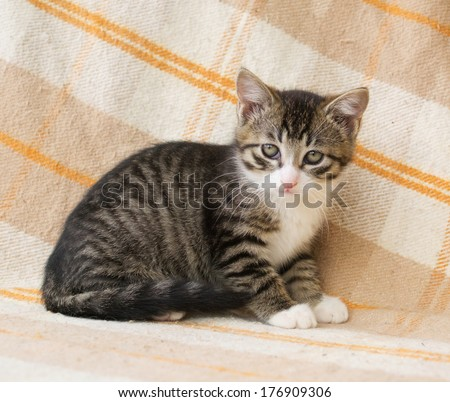 Striped kitten with sad eyes against the checkered plaid - stock photo