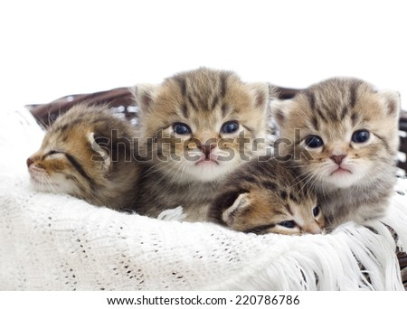 striped kittens in a basket