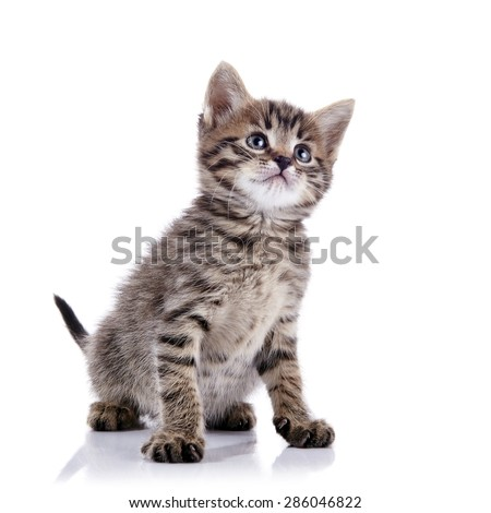 Striped lovely kitten on a white background.