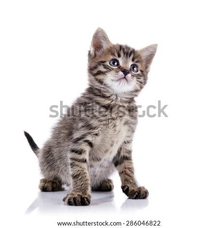 Striped lovely kitten on a white background. - stock photo