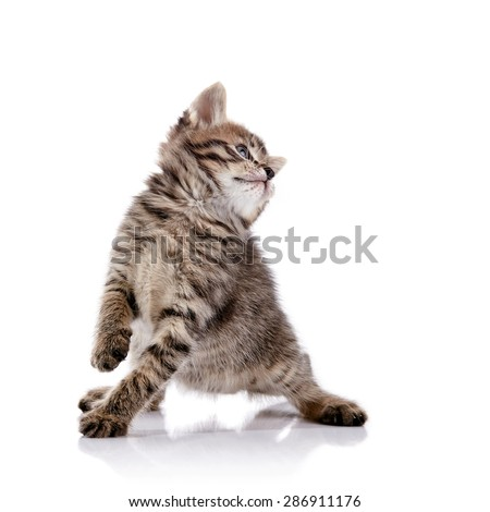 Striped lovely playful kitten on a white background. - stock photo