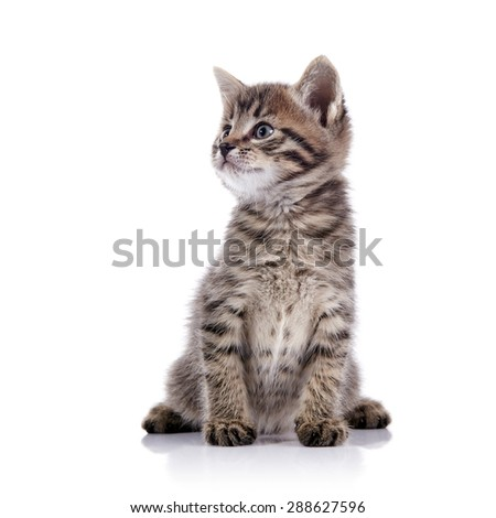 Striped lovely small kitten on a white background. - stock photo