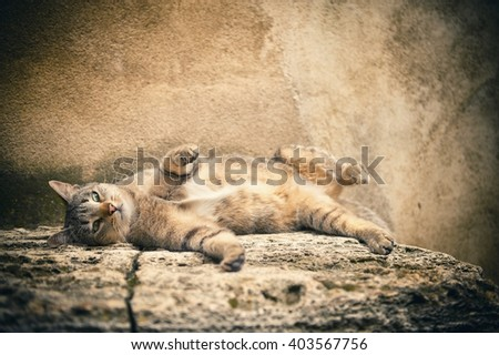 Striped tabby cat lying - small focus - stock photo