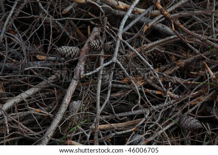 Strobiles, needles, branches of a conifer complex texture
