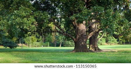 Strong old green oak tree in the park
