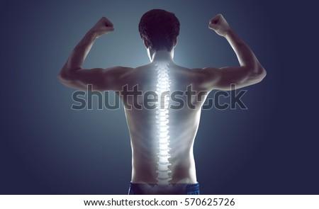 167.708 hình ảnh stock vector về cột sống con người được update trên shutterstock.com