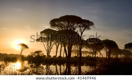 Strophylia forest in Kalogria at sunrise in Greece