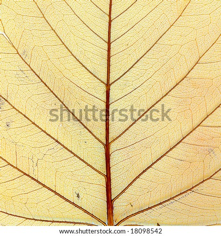 Structure of autumn leaf. Macro. Close-up.