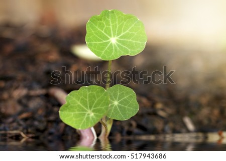 structure of green clover leaf. Closeup