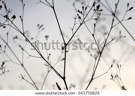 Structures of flowering grass. Shadows - stock photo