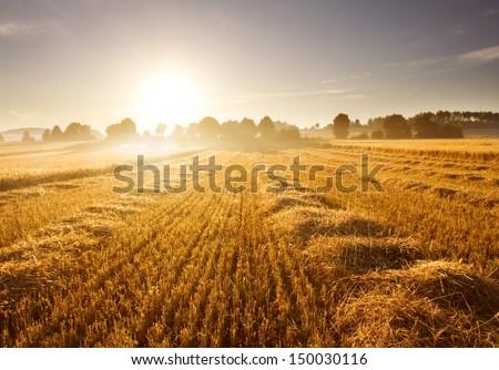 stubble field at sunrise - stock photo