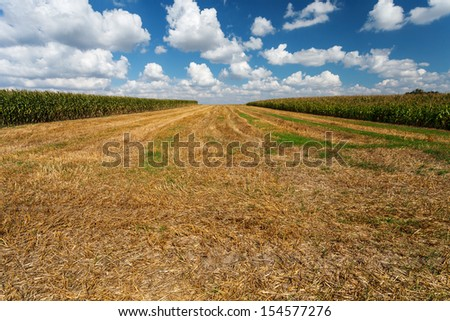 Stubble under blue cloudy sky, Poland, Europe