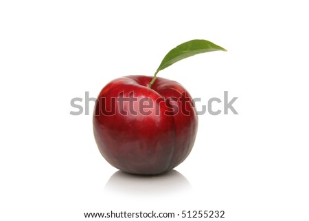 Studio Isolated, Plum, Plumb, Red with leaf