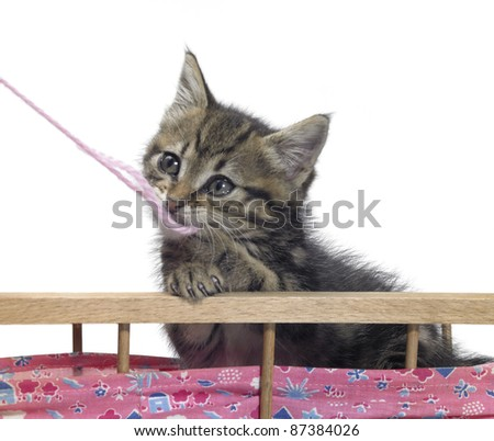 Studio photography of a cute kitten playing with wool in light back - stock photo