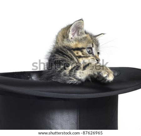 Studio photography of a kitten playing in a black top hat in white back - stock photo