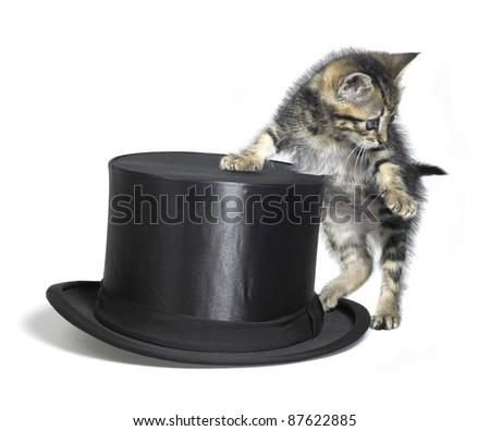 Studio photography of a kitten standing upright beside a black top hat, isolated on white - stock photo