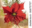 studio photography of a poinsettia flower with some decoration - stock photo