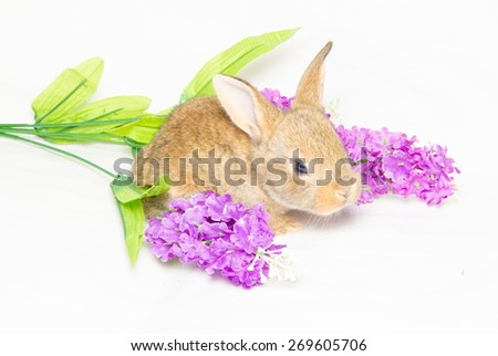 Studio portrait of baby bunny sitting on violet flowers. - stock photo