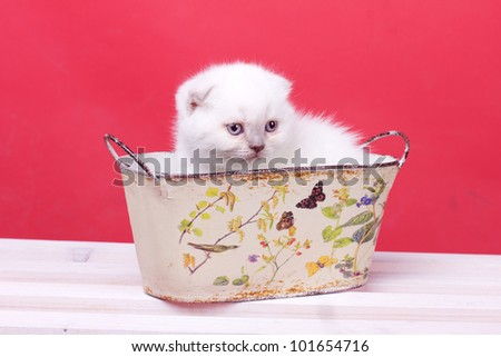 Studio portrait of beautiful young white kitten sitting in basket