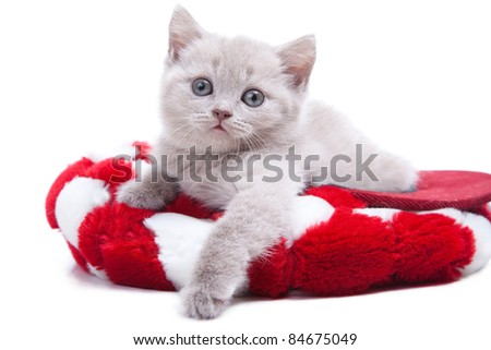 Studio portrait  of playful young peach color British kitten  lying in red hat on isolated white background - stock photo