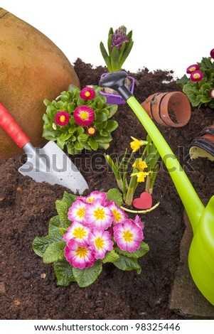 studio-shot of a flowerbed with common and popular spring flowers after watering. flowerbed with primroses, bellis perennis( daisies), hyacinth, narcissus ( daffodil ) and garden tools. - stock photo