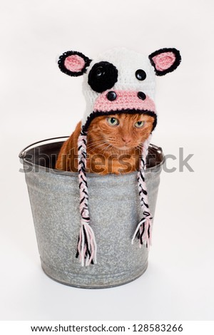 Studio shot of an adorable orange Tabby cat sitting inside of a galvanized steel bucket wearing a crocheted cow hat. - stock photo