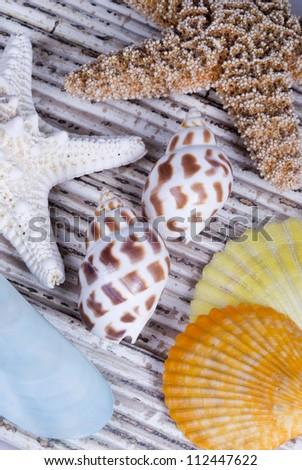 Studio shot of an assortment of colorful seashells
