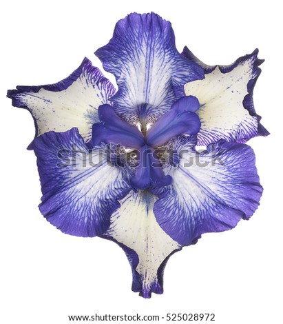 Studio Shot of Blue Colored Iris Flower Isolated on White Background. Large Depth of Field (DOF). Macro.