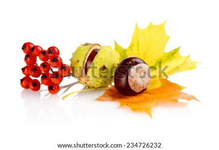 Studio shot of chestnuts with autumn leaves on white background