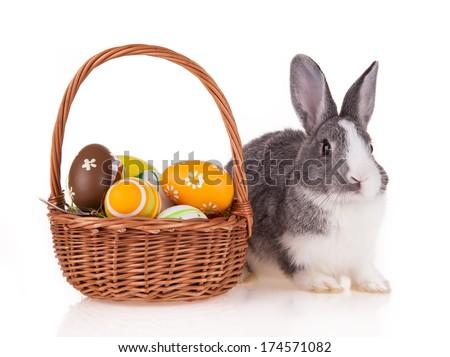 Studio shot of domestic rabbit on white background - stock photo