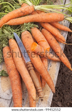 studio shot of fresh organic carrots after picking. - stock photo